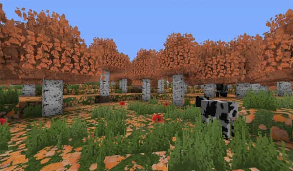 Image where we can see a landscape, a birch forest, decorated with Italiapack Texture Pack 1.15 and 1.14.