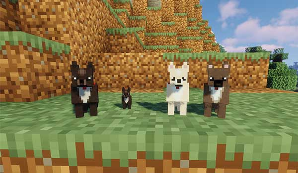 Image where we can see four dogs of the Chihuahua breed that adds the More Dogs Mod.