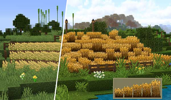 Image where we can see a comparison between a wheat field with and without the Stay True.