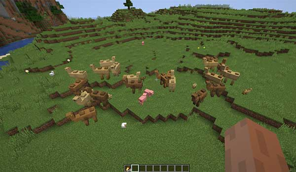 Image where we can see a group of camels, from the Camels Mod in the grassland biome.